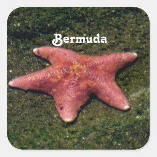 Starfish Square Sticker