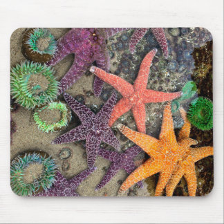 Starfish, the Gems of the sea Mousepad