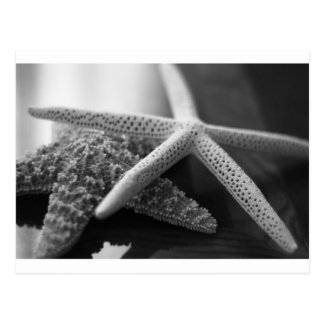 Starfishes mono postcard