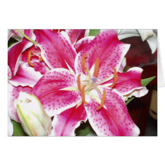 Stargazer Lilies Blank Inside Greeting Cards