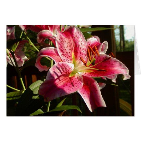 Stargazer Lilies Card