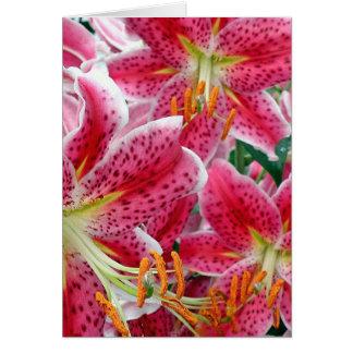 Stargazer Lilies Note Cards