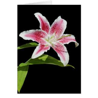Stargazer Lily Cards