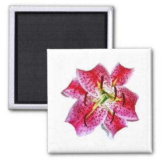 Stargazer Lily Closeup Magnet