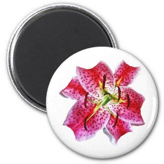 Stargazer Lily Closeup Refrigerator Magnet