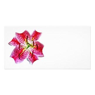 Stargazer Lily Closeup Photo Card