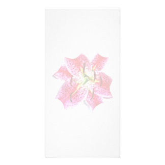 Stargazer Lily Closeup Photo Cards