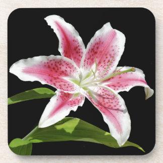 Stargazer Lily Coasters
