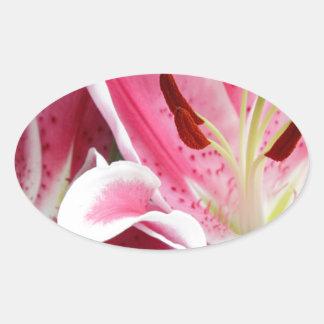 Stargazer Lily Flowers Closeup Oval Sticker