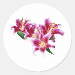 Stargazer Lily Heart Round Sticker