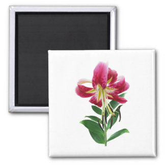 Stargazer Lily Looking Down Square Magnet