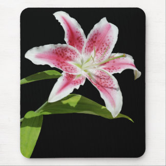 Stargazer Lily Mouse Pads