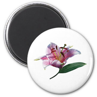 Stargazer Lily Profile Gifts 6 Cm Round Magnet