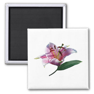 Stargazer Lily Profile Gifts Square Magnet