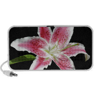 Stargazer Lily Travelling Speakers