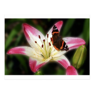Stargazer Lily With Butterfly Postcard