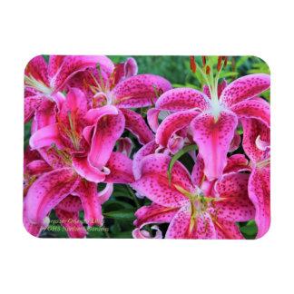 Stargazer Oriental Lilies Magnet