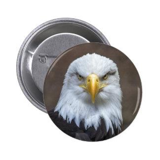 Staring Bald Eagle 6 Cm Round Badge