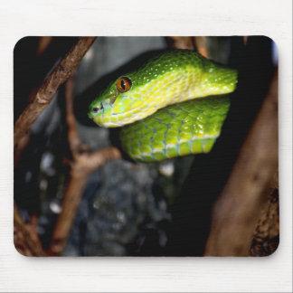 Staring green snake mousepad
