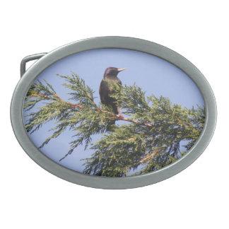 Starling in a Spruce Tree Belt Buckle