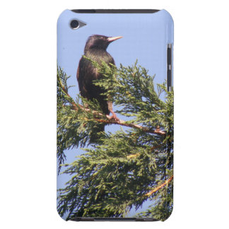 Starling in a Spruce Tree iPod Case