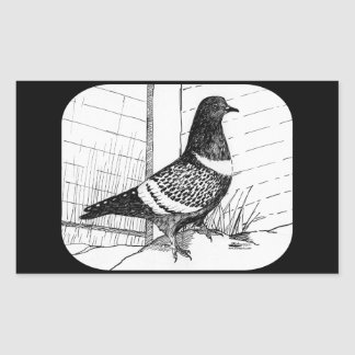 Starling Pigeon 1973 Rectangular Sticker