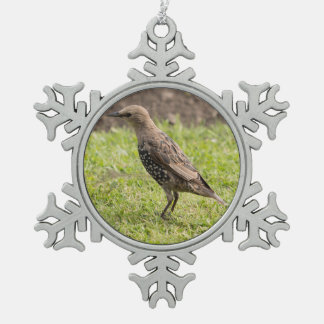 Starling Snowflake Pewter Christmas Ornament