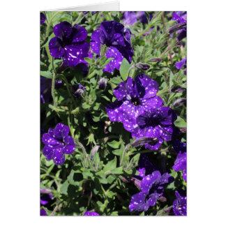 Starry Night Petunia greeting card