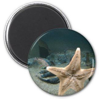 stars 6 cm round magnet