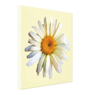 STARTING UNDER $100 - Daisy Looking Up Stretched Canvas Prints