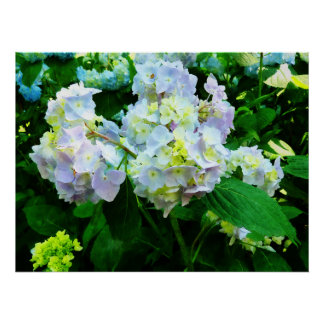 STARTING UNDER $20 - Lavender Hydrangea in Garden Poster
