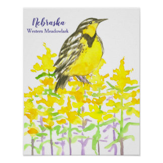 State Bird of Nebraska Western Meadowlark Poster