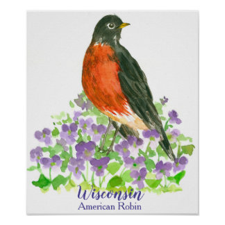 State Bird of Wisconsin American Robin Poster