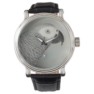Stately African Grey Parrot Watch