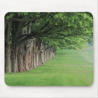 Stately row of trees, Louisville, Kentucky. Mouse Mat