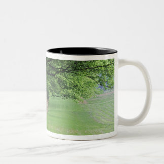 Stately row of trees, Louisville, Kentucky. Two-Tone Coffee Mug