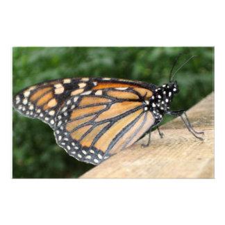 Stationery - Monarch Butterfly