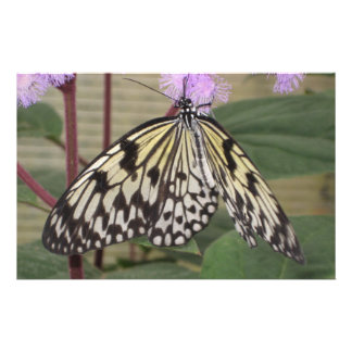 Stationery - Paper Kite Butterfly