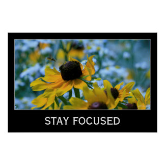 Stay Focused Quote Daisies 36x24 Custom Motivation Poster