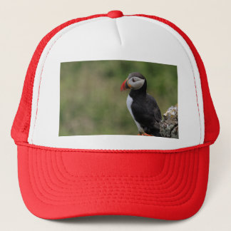 Steady as a Rock Puffin Hat