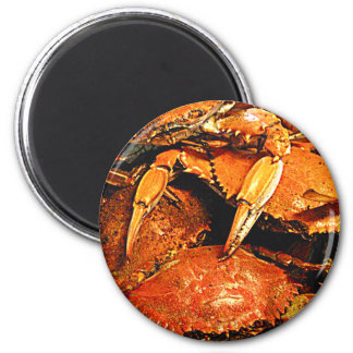 Steamed Maryland Hard Crabs 6 Cm Round Magnet