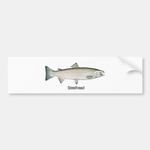 Steelhead Rainbow Trout Bumper Stickers
