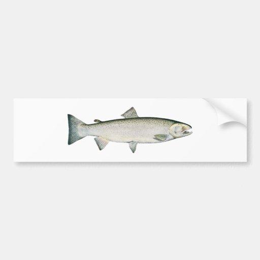 Steelhead Rainbow Trout Bumper Sticker