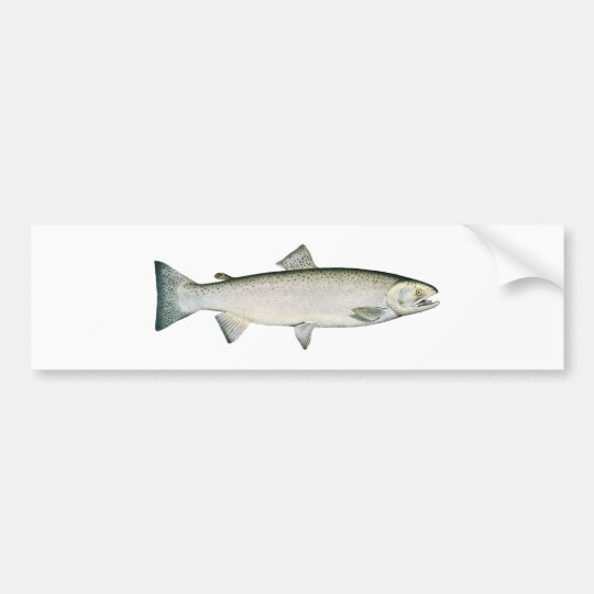Steelhead Rainbow Trout Bumper Sticker
