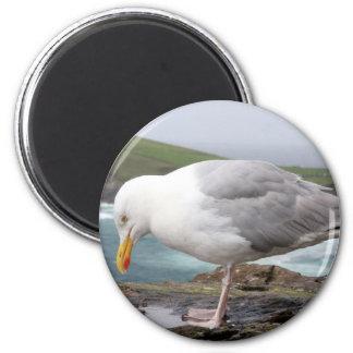 stehende Moewe 6 Cm Round Magnet