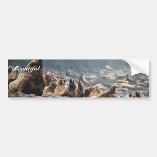 Stellar sea lions on Buldir Island Car Bumper Sticker