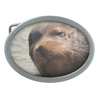 Steller sea Lion Belt buckle