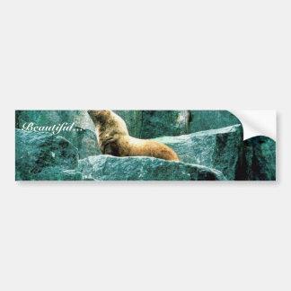 Steller Sea Lion Bumper Sticker