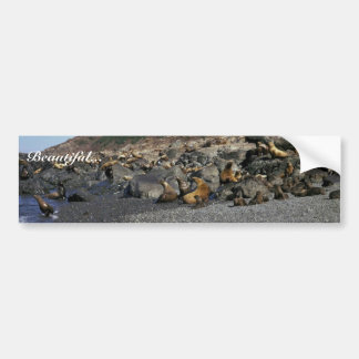 Steller Sea Lion Car Bumper Sticker