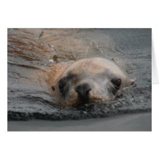 Steller Sea Lion Greeting Card